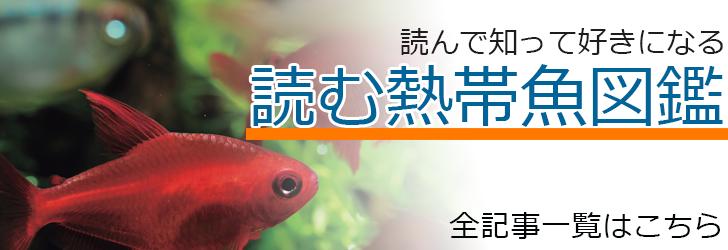 読む熱帯魚図鑑記事一覧