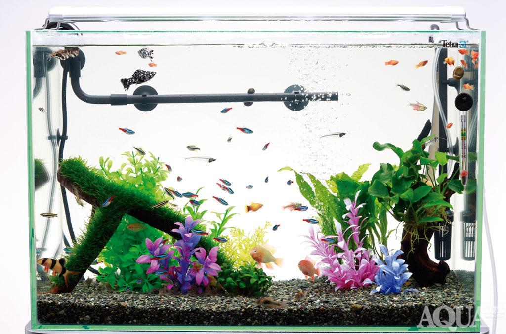 熱帯魚の飼育イメージ