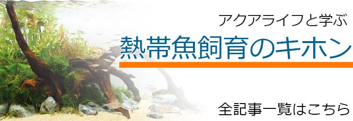 熱帯魚飼育のキホン記事一覧
