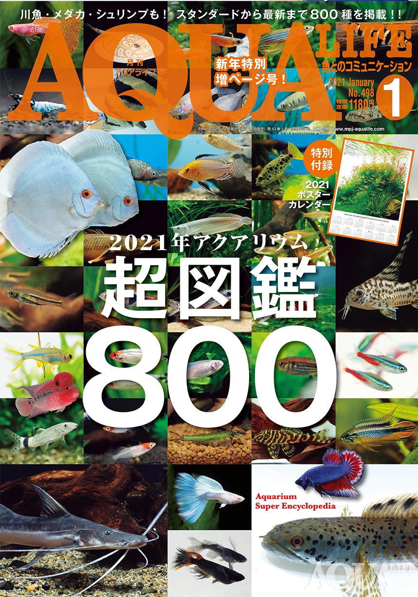 2021年アクアリウム超図鑑800