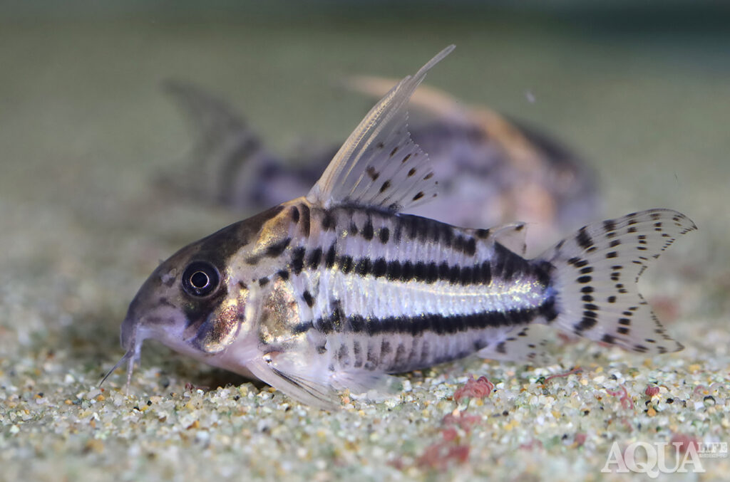 熱帯魚水槽撮影